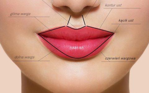 Anatomia i budowa ust dla laików Medycyna Estetyczna Poznań Biogenica